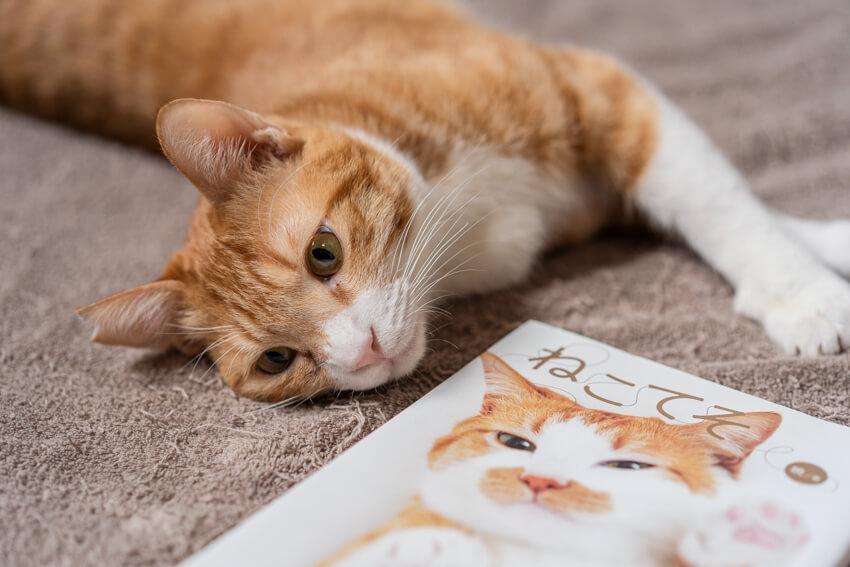 保護 猫 石川 県
